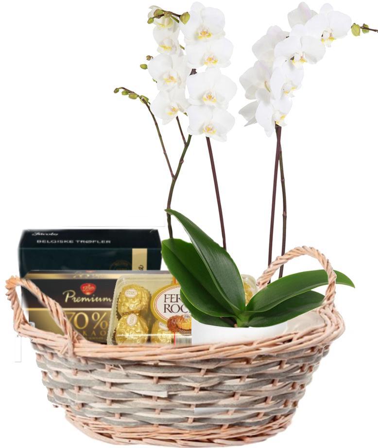 Orkidé med sjokolade Konfekt